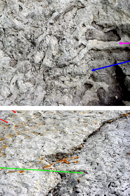2 pictures.  1.  Burrowed rock shows burrows from big and small animals.  2.  Heavily burrowed area buried by a moderately burrowed area.