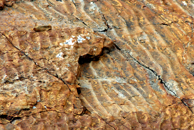 close up of a rock showing a rippled layer covered up by another rippled layer.