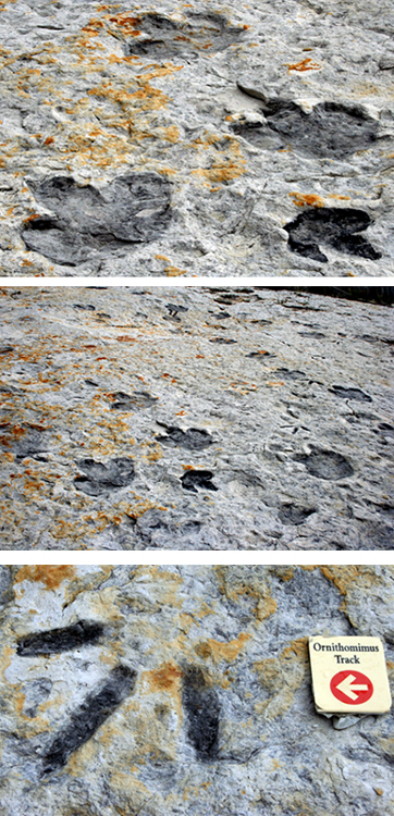 Three close ups of dinosaur tracks.