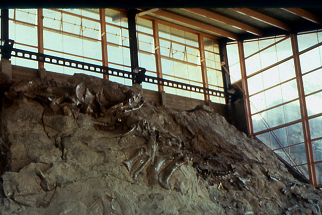 The quarry at Dinosaur Ledge revealing dinosaur fossils.  The quarry is now under a man made structure.