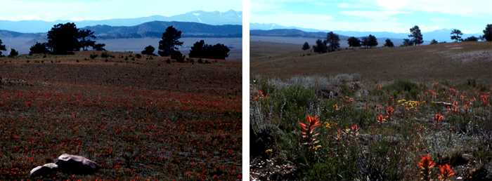 South Park with colorful paintbrush in bloom.