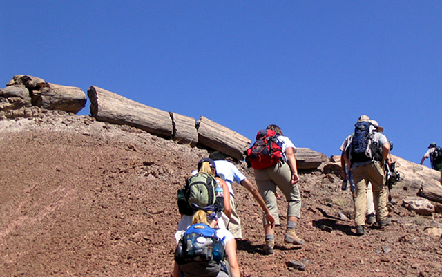 Students hiking up a hill of dirt.  There are petrified trees laying on the ground at the crest of the hill