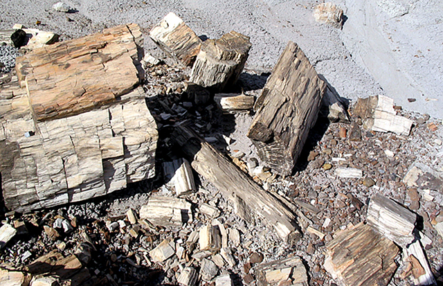 Pile of petrified wood includes one large chuck and many smaller pieces.