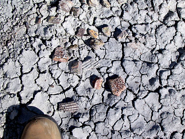 Close up of the dry ground with fossil bone fragments scattered on it.