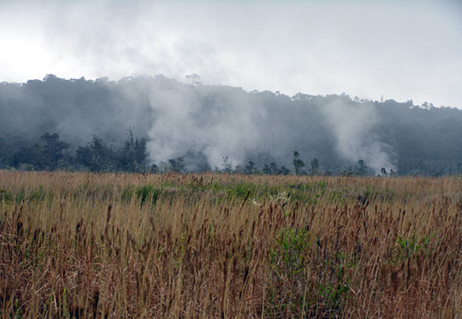 filed with tall grass in the front and a mountain in the back. Steam is rising from the space between the two.