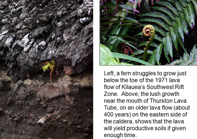 left: fern growing out of lava rock. Right: close up of ferns.