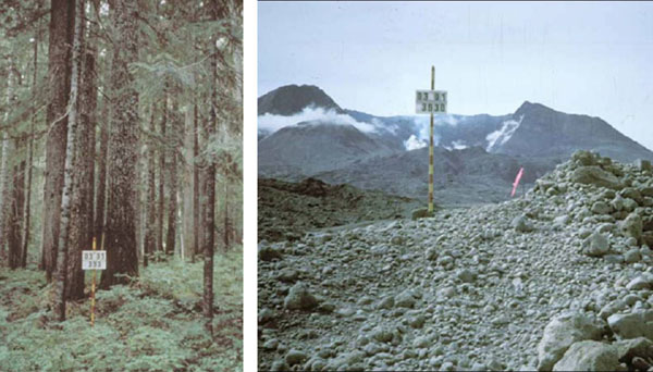 Left image is a stand of trees.  Second image is taken from the same place but shows the mountain with a crater after the eruption.