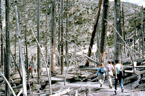10 years after the eruption students walking through a stand of dead trees that were largely shielded from the blast.