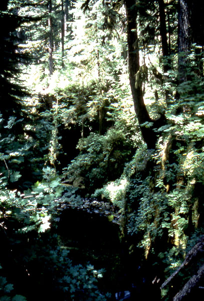 Rainforest growth found inland at Olympic National Park.
