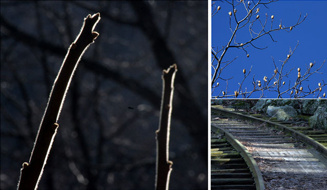 Three pictures.  1.  The reconstructed narrow-gauge railroad tracks,. 2. Tulip tree branches. 3. Two hairy sumac stems.