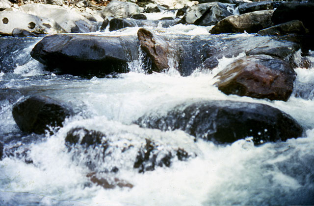 Close-up view of a stream in the Smokies.