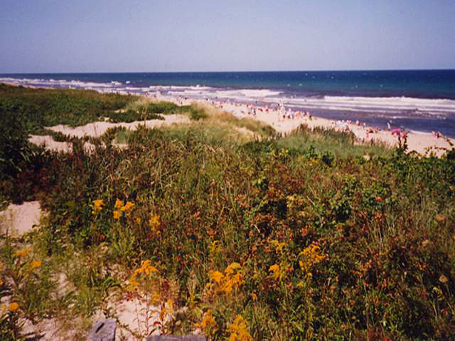 Cape Cod sand dune with a thin layer of hardy vegetation. Ocean in background spotted with beach goers