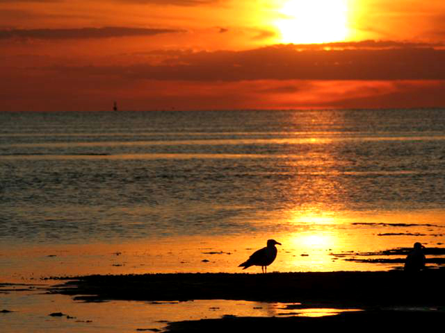 Bright orange sunset at First Encounter Beach. Herring gulls in the foreground