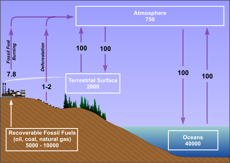 Schematic of earth's carbon cycle