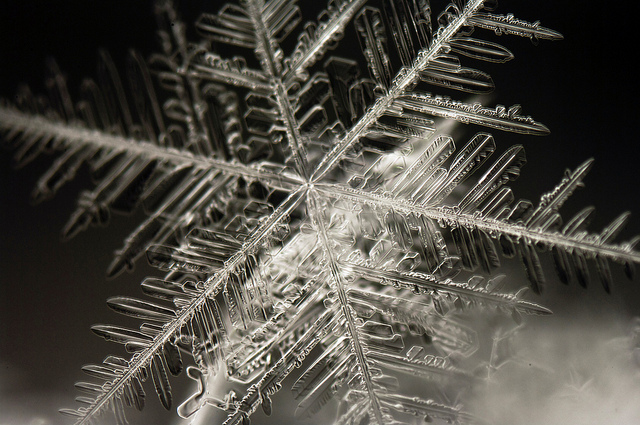 close up view of a snowflake