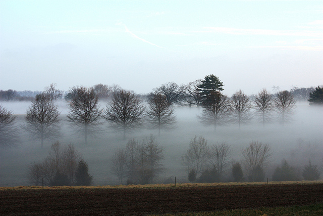 fog surrounding trees