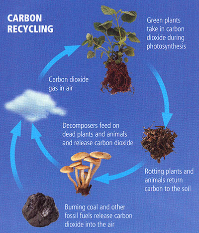 The carbon cycle illustrated, see long description linked in caption below
