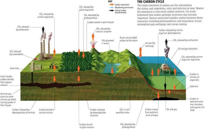 Global carbon cycle.