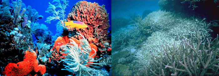 Left: Healthy Coral Reef; Right: Bleached Coral Reef